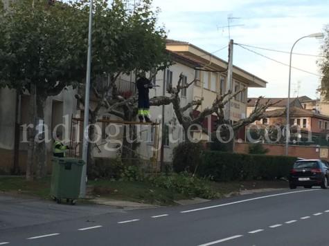 Operarios municipales realizando trabajos de poda