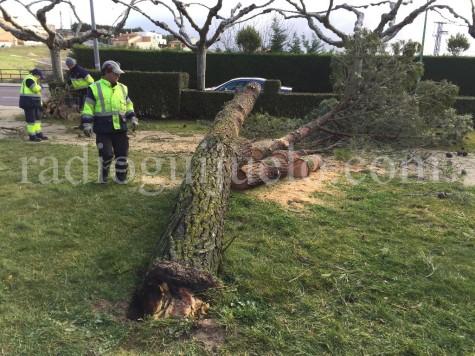 El viento derriba un árbol en la zona del Pozuelo
