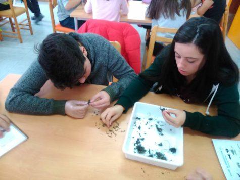 Alumnos del IES Vía de la Plata. Foto IES de la Plata.